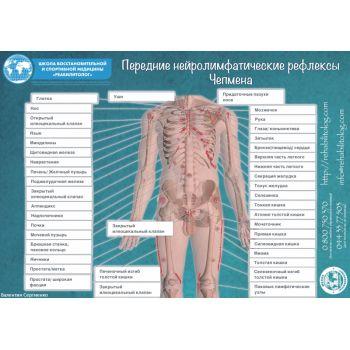 """Плакат """"Нейролимфатические рефлексы Чепмена"""" 2шт."""